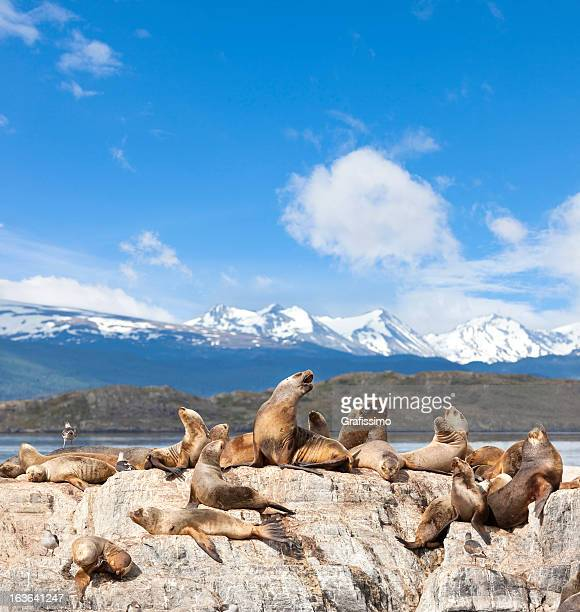 argentina ushuaia sea lions on island at beagle channel - patagonia stock pictures, royalty-free photos & images