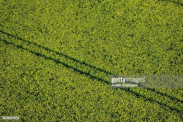 argiculture oil seed rape