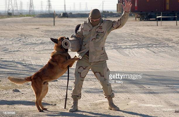 Argo a US Navy police dog apprehends a role player acting as a suspect during a practice exercise Argo who is trained as a bomb and patrol dog has...