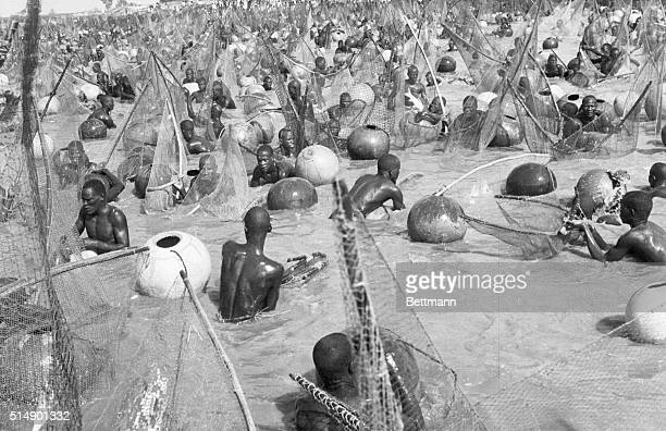 Argungu Northern Nigeria Catch As Catch Can there is hardly room for the fish as men nets and floats jam sardine like into the water during the...