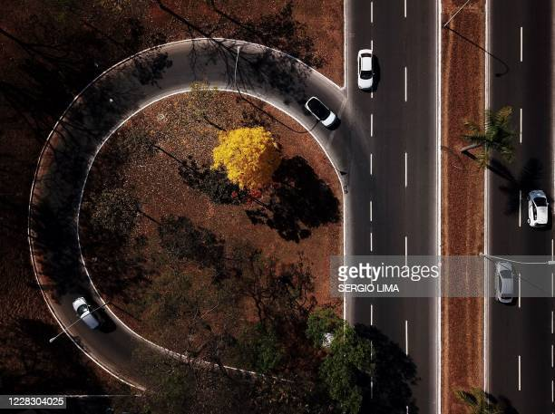 Arial view of a yellow ipe or lapacho in the central region of Brasilia on September 1, 2020.