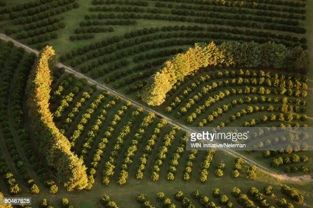arial view of trees and bushes - uruguay stock pictures, royalty-free photos & images