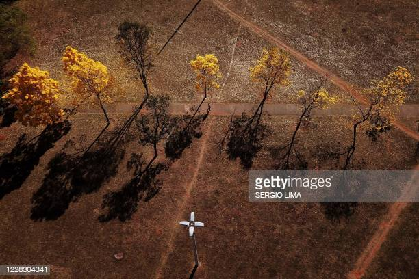 Arial view of yellow ipe or lapacho in the central region of Brasilia on September 1, 2020.