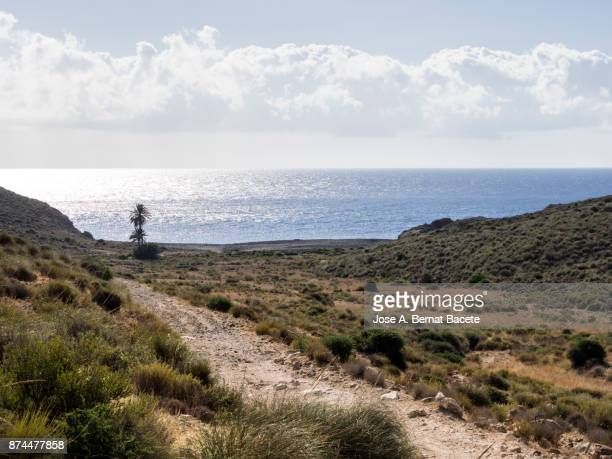 Arid and desert landscape, with dunes of sand, plants, shrubs and a great palm tree in the edge of the beach, a sunny day with blue sky. Beach cala Carnaje, Cabo de Gata - Nijar Natural Park,  Biosphere Reserve, Almeria,  Andalusia, Spain.