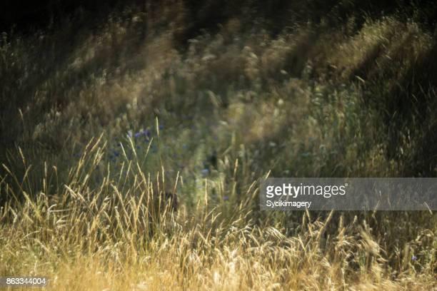 arid grassy meadow, painterly effect