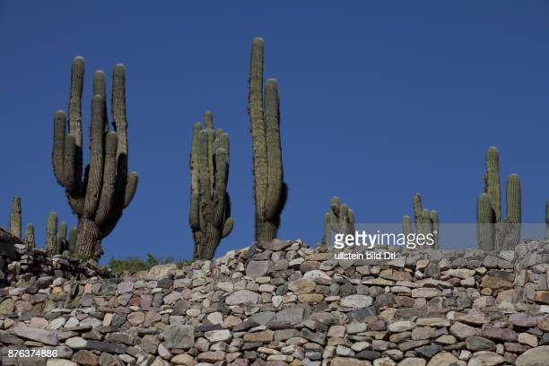 Arid landscape with cactii and desert rock formations near Humahuaca in Jujuy province in the Andes region of Argentina South America