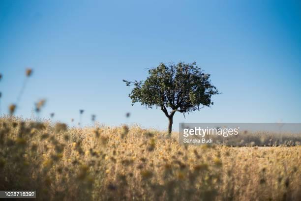 arid nature of castilla y león - castilla y león bildbanksfoton och bilder