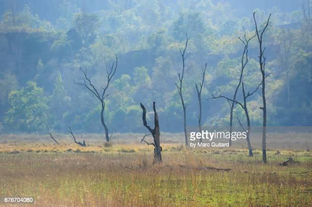 Arid Valley, Rajaji National Park, Uttarakhand, India