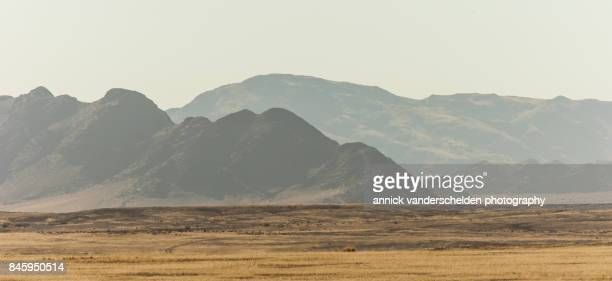arid vegetation and mountains along the sossusvlei road. - heat haze stock pictures, royalty-free photos & images