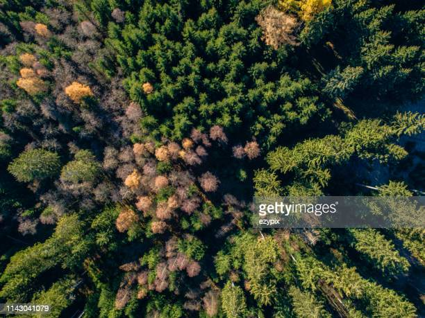 秋の森の真上にアリエルビュー - テューリンゲン州 ストックフォトと画像