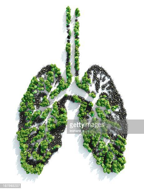 Ariel view of foliage planted in the shape of lungs