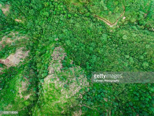 ariel view of lush green forest - sustainable development goals stock pictures, royalty-free photos & images