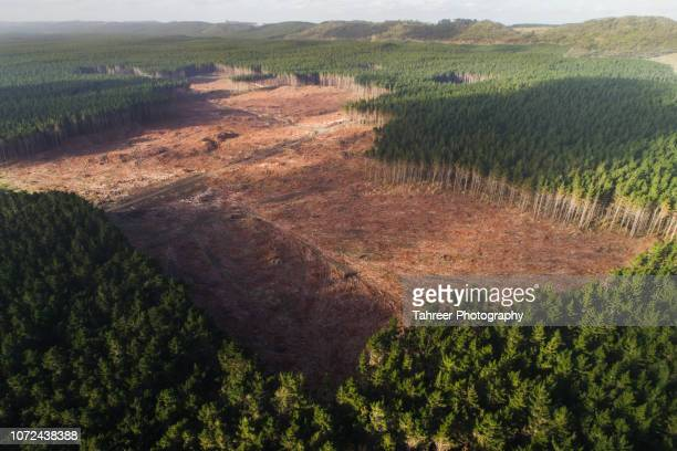 ariel view of trees being cut down in the pine forest - deforestation stock pictures, royalty-free photos & images