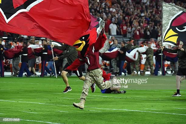 Arizona Cardinals mascot Big Red runs onto the field before the NFL game against the Cincinnati Bengals at University of Phoenix Stadium on November...