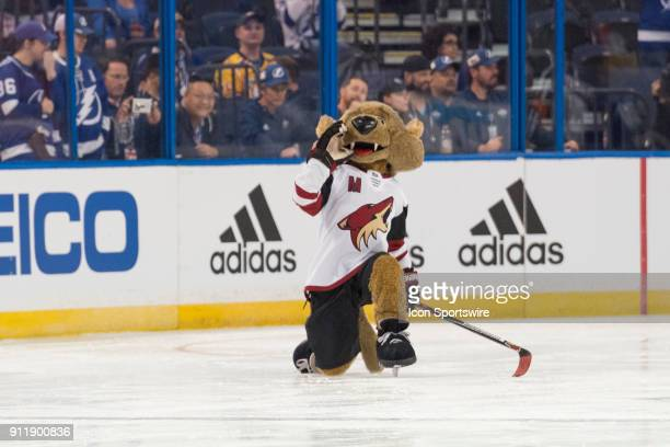 Arizona Coyotes' mascot Howler the Coyote celebrates a goal during the mascot game prior to the NHL AllStar Game on January 28 at Amalie Arena in...