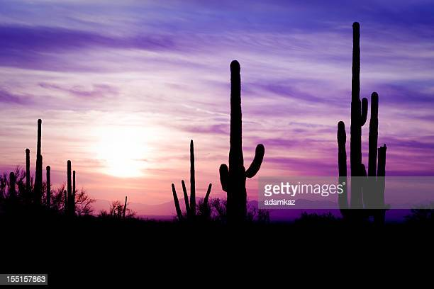 Arizona Desert Cactus Sagauro Winter Sunset