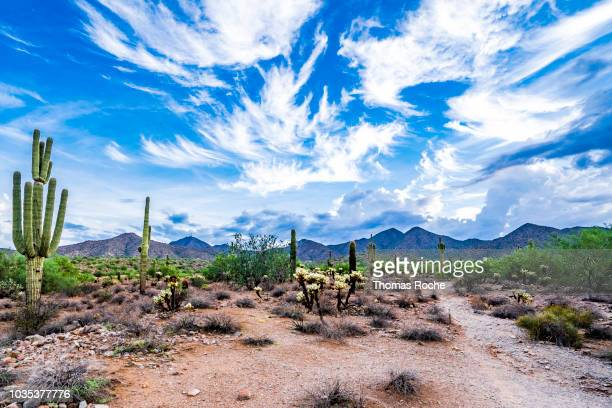 Arizona desert landscape and skyscspe