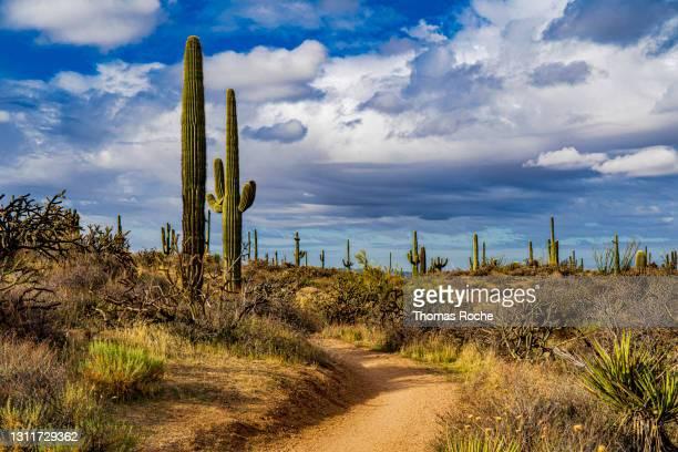 arizona desert landscape - southwest stock pictures, royalty-free photos & images