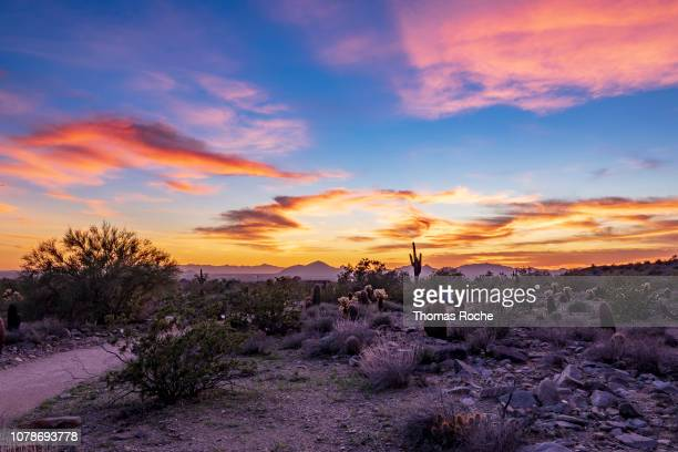 arizona desert sunset - arizona stock pictures, royalty-free photos & images
