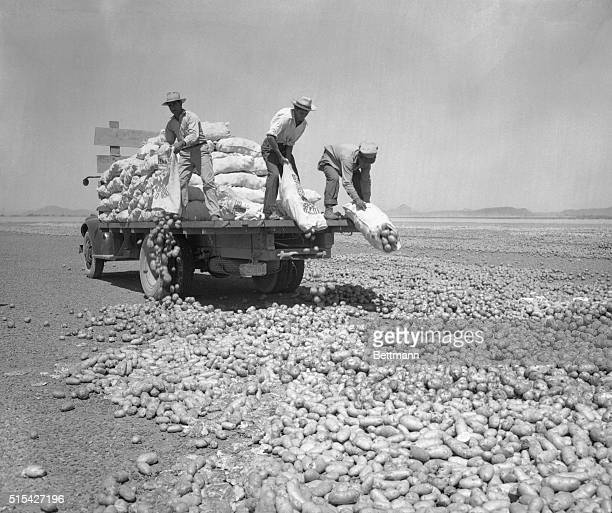 Arizona farmers dump more than 1000 pounds of newly harvested potatoes on the sun baked landing strip of disbanded Thunderbird Field at Glendale once...