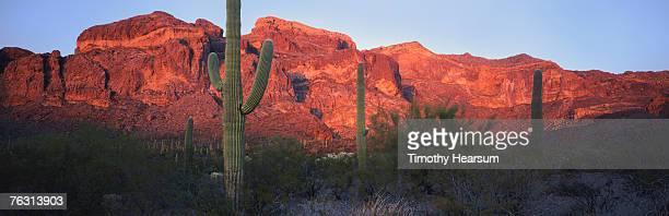 usa, arizona, near tucson, saguaro cactus national monument - timothy hearsum - fotografias e filmes do acervo