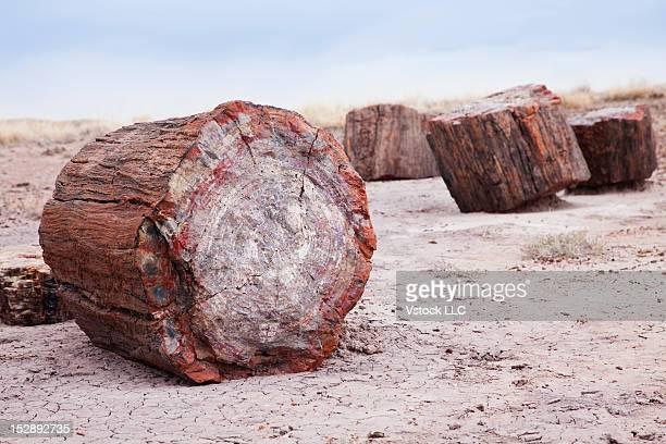 USA, Arizona, Petrified Forest National Park, Petrified wood