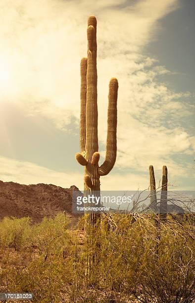 Arizona saguaro national park cactus