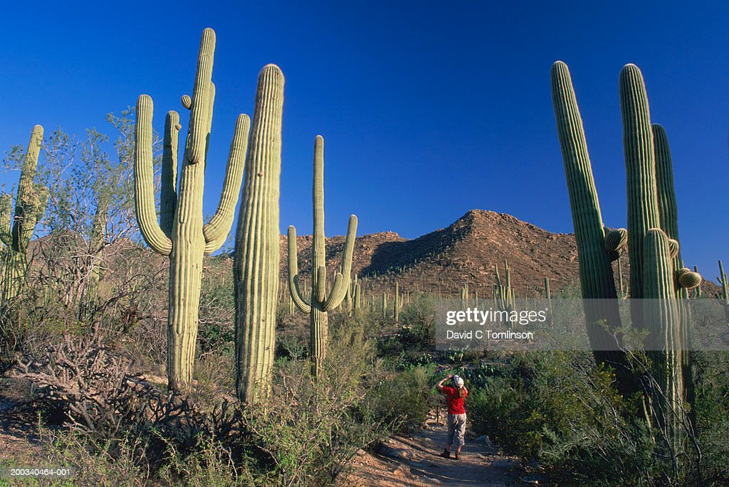 USA, Arizona, Saguaro National Park, girl (13-15) photographing cactus : Stock Photo
