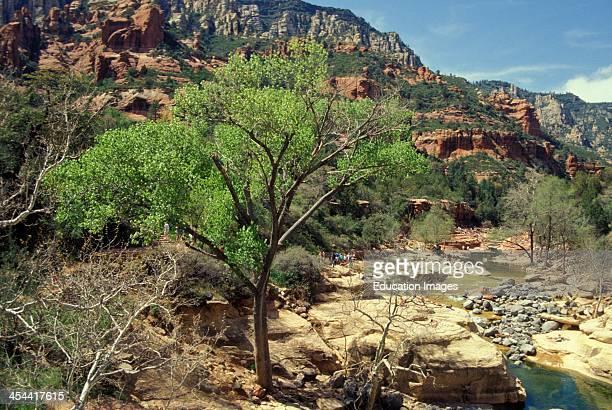 Arizona Sedona Slide Rock State Park Oak Creek Canyon People On Banks Of Creek