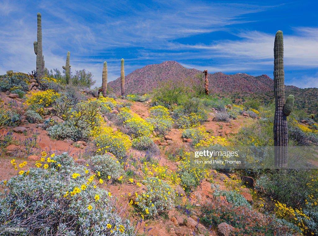 Arizona spring desert : Stock Photo