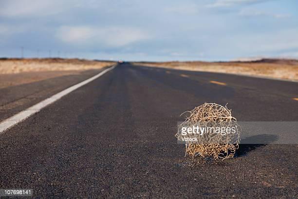 usa, arizona, tumbleweed on highway - tumbleweed stock photos and pictures