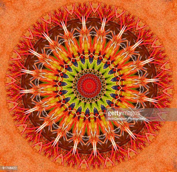 Arizona Wildflower Kaleidoscope