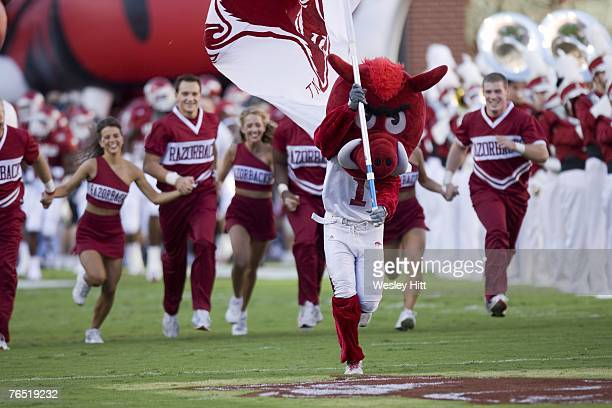 Arkansas Razorback cheerleaders and mascot lead the team onto the field before a game against the Troy Trojans at Donald W. Reynolds Stadium on...