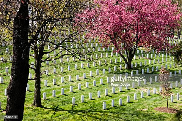 arlington national cemetary - arlington national cemetery stock pictures, royalty-free photos & images