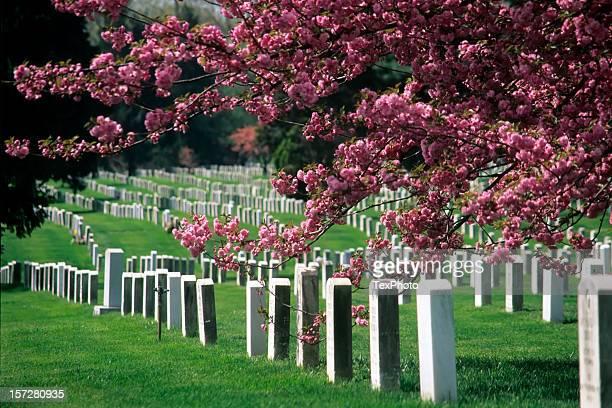 nationalfriedhof arlington in voller blüte - arlington texas stock-fotos und bilder