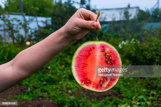 Arm of person holding watermelon slice
