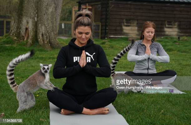 Armathwaite Hall hotel in Keswick, Cumbria holds Lemoga classes with the lemurs from Lake District Wild Life Park mingling with the class to create a...