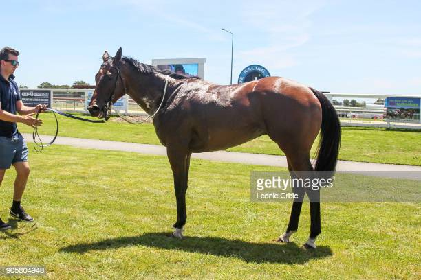Armed And Ready after winning the Helloworld Maiden Plate at Moe Racecourse on January 17 2018 in Moe Australia