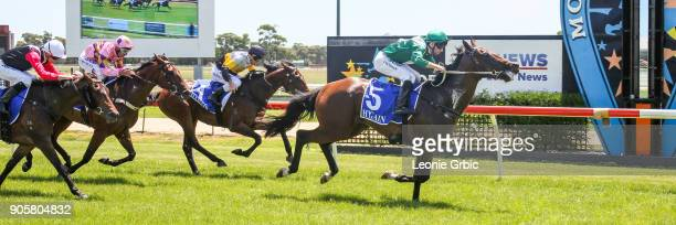 Armed And Ready ridden by Jake Noonan wins the Helloworld Maiden Plate at Moe Racecourse on January 17 2018 in Moe Australia