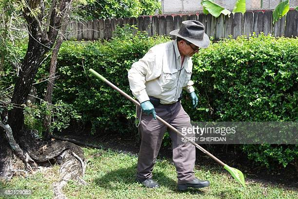 Armed with gloves and rakes inspectors with the Florida Department of Agriculture search for Giant African Snails in a suburban backyard in Miami...