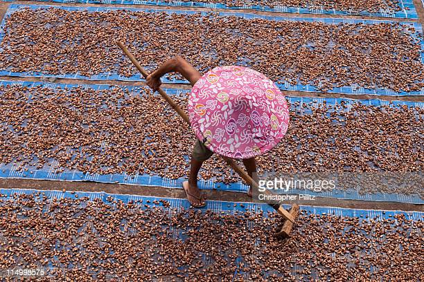 armer dries cocoa beans in village