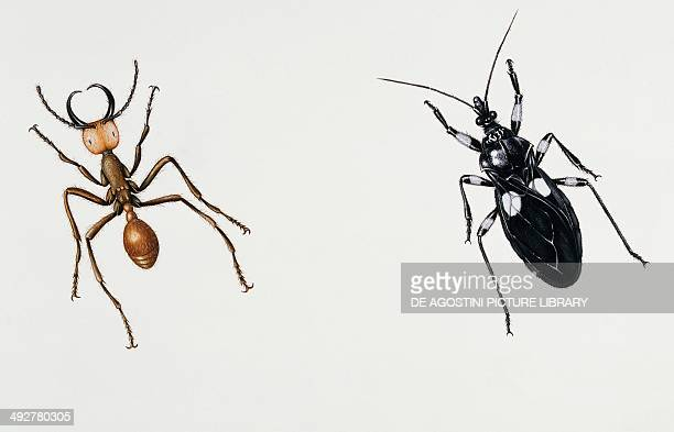 Army ant Formicidae and Assassin bug Reduviidae Artwork by Rebecca Hardy