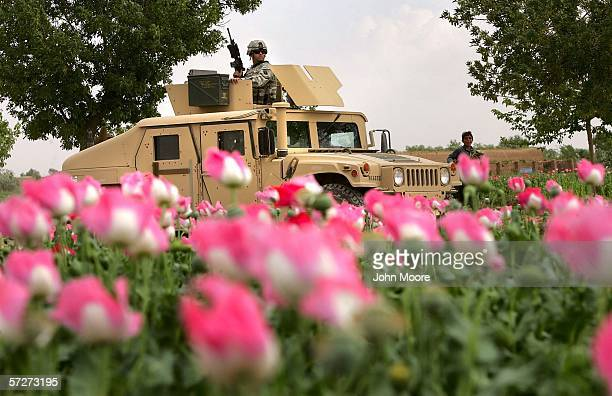 S Army humvee passes an opium poppy field on April 1 2006 near Lashkar Gah in Helmand province of southern Afghanistan One US soldier and one...