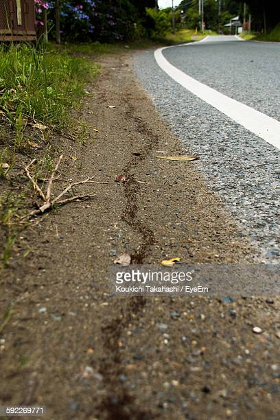 Army Of Ants On Field By Empty Road