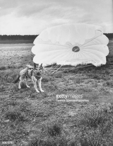 Army parachute jumping dog