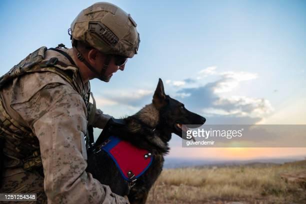 訓練を受けた犬を愛する陸軍兵士 - 訓練犬 ストックフォトと画像