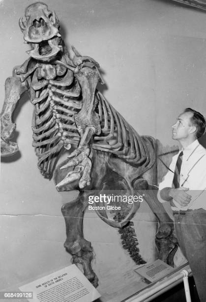 Arnold Lewis prepares a fossil at the Museum of Comparative Zoology at Harvard University in Cambridge Mass on Jan 17 1962
