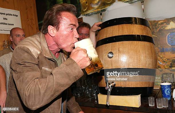 Arnold Schwarzenegger draws beer during his visit at the Schuetzenfestzelt during the Oktoberfest 2015 at Theresienwiese on September 24 2015 in...