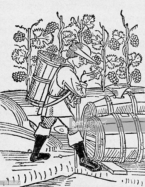 Picking grapes for wine Engraving of 1506 Ulm AV Valenciaborn alchemist astrologer and physician Discovered carbon monoxide and pure alcohol 1235–1311