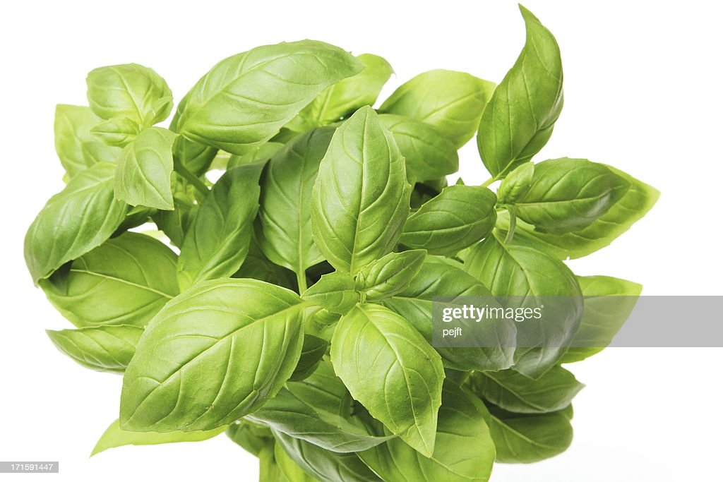 Aromatic Basil / basilicum green herb : Stock Photo